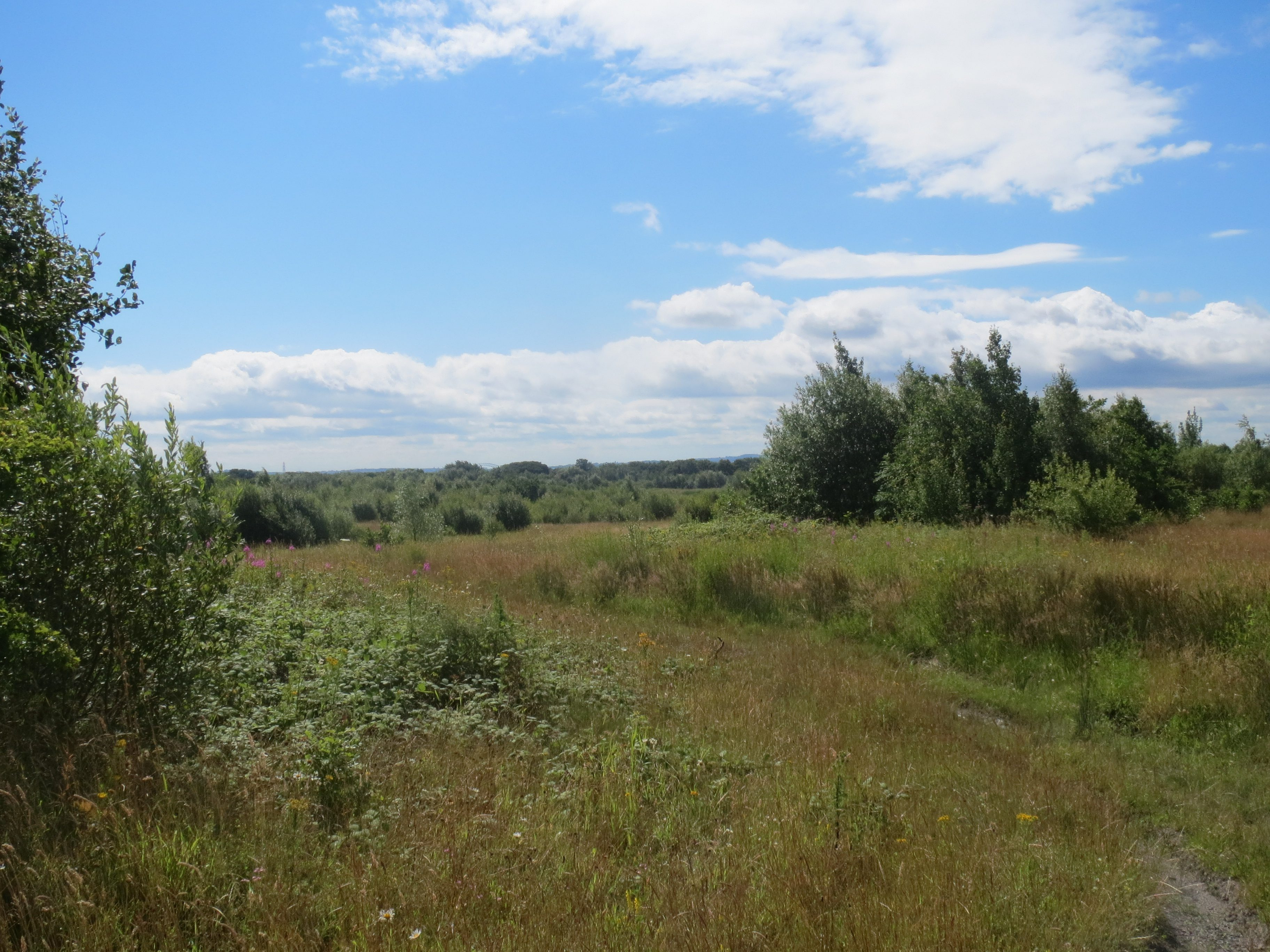 View of the land at Cronton Colliery on a sunny day