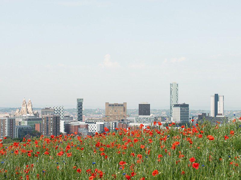 Picture of Liverpool Waterfront from the wildflower meadow at Everton Park