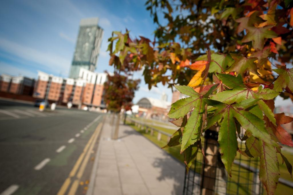 Manchester - City of Trees