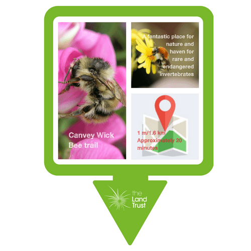 Canvey Bee trail