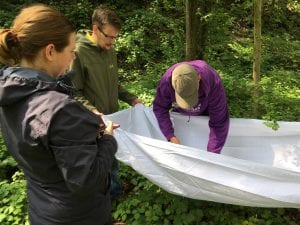 Wildlife ID Trainees discover creatures during a tree-shaking exercise