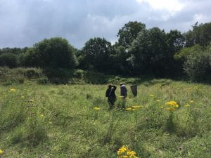Wildlife ID trainees search for butterflies in the meadow at Hassall Green